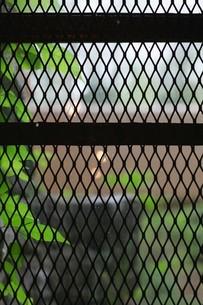 サッシ越しに庭を望むの写真素材 [FYI01237749]