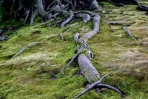 木の根の写真素材 [FYI01237802]