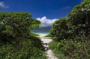 小浜島 南の島の癒しのビーチの写真素材 [FYI01237940]