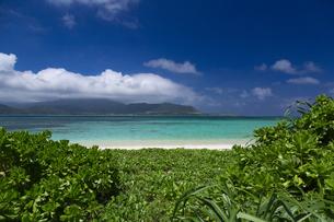 小浜島 南の島の癒しのビーチの写真素材 [FYI01237941]