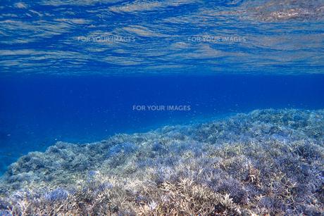 サンゴ礁の海の中の写真素材 [FYI01237951]