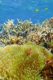 サンゴ礁の海の中の写真素材 [FYI01237954]