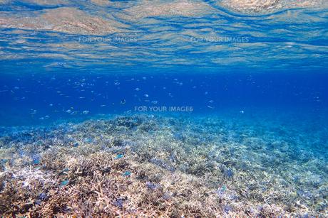 サンゴ礁の海の中の写真素材 [FYI01237956]