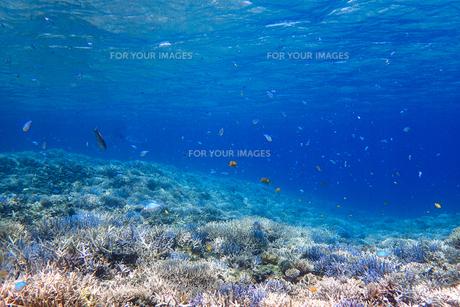 サンゴ礁の海の中の写真素材 [FYI01237957]
