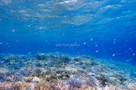 サンゴ礁の海の中の写真素材 [FYI01237958]