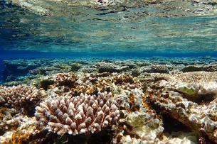サンゴ礁の海の中の写真素材 [FYI01237959]