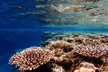 サンゴ礁の海の中の写真素材 [FYI01237960]