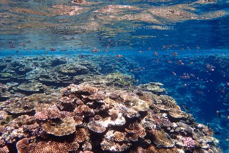 サンゴ礁の海の中の写真素材 [FYI01237964]