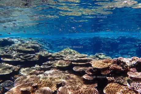 サンゴ礁の海の中の写真素材 [FYI01237968]