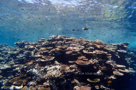 サンゴ礁の海の中の写真素材 [FYI01237972]