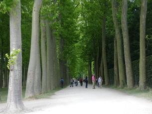大樹の続く道の写真素材 [FYI01238017]
