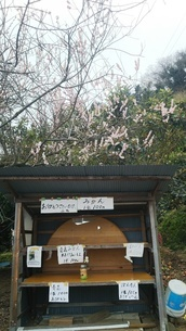 薩埵峠(さったとうげ)の産直無人スタンド 売り切れの写真素材 [FYI01238204]