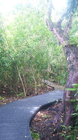 オーストラリア クイーンズランド州 ケアンズ グリーン島 Australia Cairnsの写真素材 [FYI01238231]