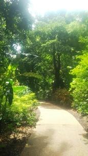 オーストラリア クイーンズランド州 ケアンズ 植物園 Botanic Gardens Australia Cairnsの写真素材 [FYI01238240]