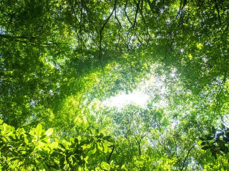 緑の天体の写真素材 [FYI01238279]