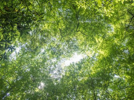 緑の天体の写真素材 [FYI01238280]