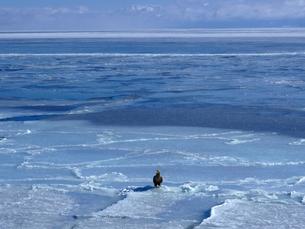 流氷とイーグルの写真素材 [FYI01238364]