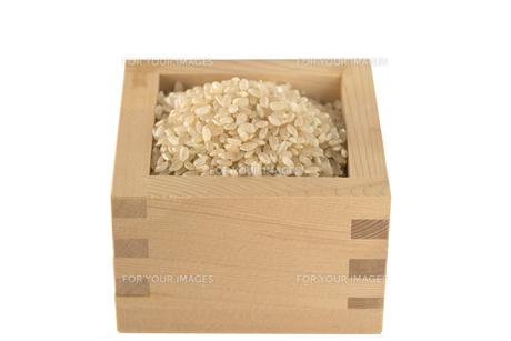 玄米の写真素材 [FYI01238470]
