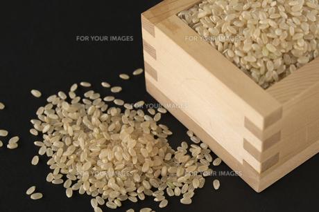玄米の写真素材 [FYI01238472]