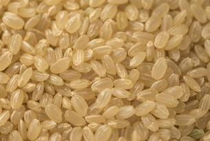 玄米の写真素材 [FYI01238475]