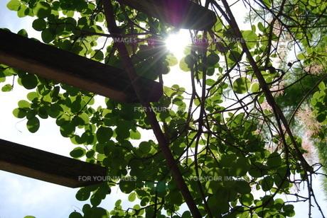 日差しの写真素材 [FYI01238487]