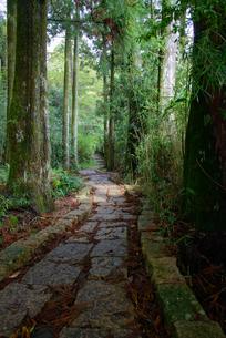 森の中の散策道の写真素材 [FYI01238554]