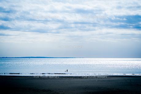 一人波を待つサーファーの写真素材 [FYI01238561]