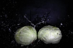 キャベツと水飛沫の写真素材 [FYI01238953]