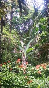 オーストラリア クイーンズランド州 キュランダ 熱帯雨林 Australia Kuranda Cairnsの写真素材 [FYI01238992]