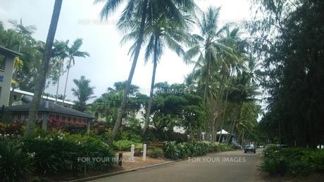 オーストラリア クイーンズランド州 パームコーヴ 海岸通り4 Palm Cove Australia Cairnsの写真素材 [FYI01239005]