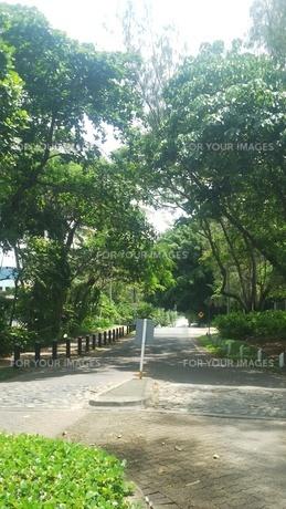 オーストラリア クイーンズランド州 パームコーヴ 街並み Palm Cove  Australia Cairnsの写真素材 [FYI01239019]