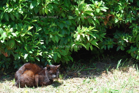 野良猫の写真素材 [FYI01239103]