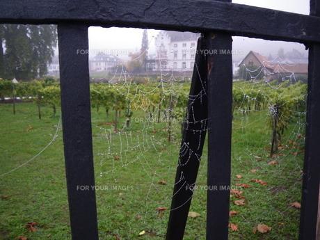 幾何学的なクモの巣の写真素材 [FYI01239188]