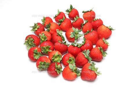 イチゴの写真素材 [FYI01239197]