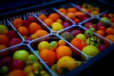 トマト 盛り合わせの写真素材 [FYI01239506]