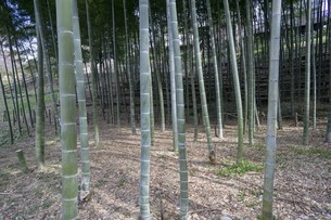 竹と空間と影の写真素材 [FYI01239606]