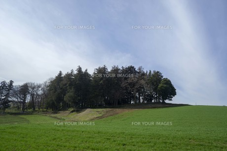 春の緑と空の写真素材 [FYI01239609]