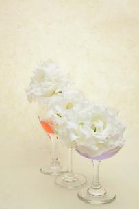 トルコキキョウとグラスの写真素材 [FYI01239641]