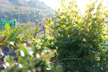 田舎の風景の写真素材 [FYI01240052]