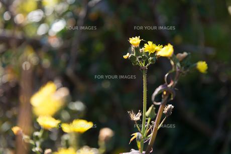 野の草の写真素材 [FYI01240053]