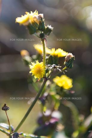 野の草の写真素材 [FYI01240054]