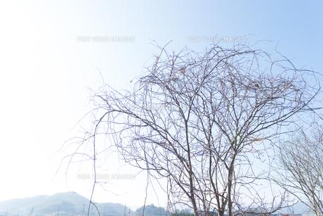 冬の景色の写真素材 [FYI01240055]