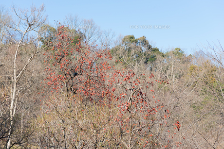 田舎の風景の写真素材 [FYI01240225]