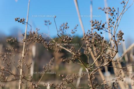 田舎の風景の写真素材 [FYI01240227]