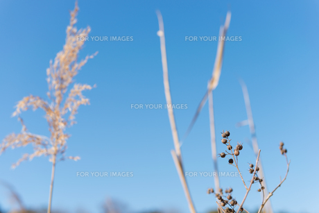 田舎の風景の写真素材 [FYI01240228]