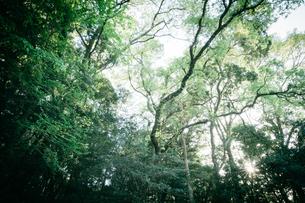 森林の写真素材 [FYI01240298]