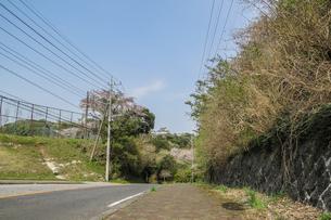 春の大多喜城の風景の写真素材 [FYI01240308]
