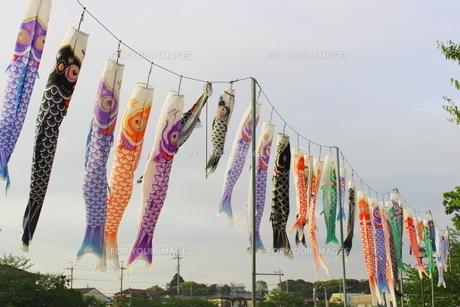 青空に舞う5月の節句の鯉のぼりの写真素材 [FYI01240327]