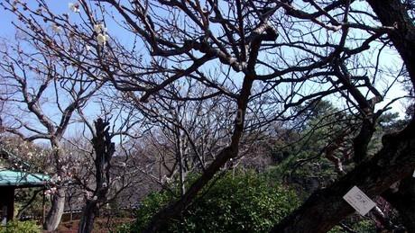 等々力渓谷(東京都世田谷区) 木に咲く花の写真素材 [FYI01240345]