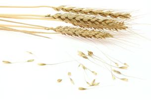 麦の写真素材 [FYI01240407]